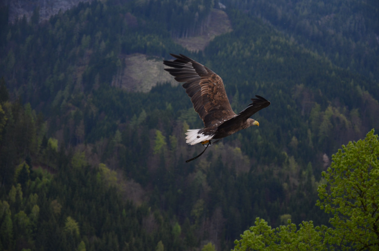 https://jsmelevice.cz/wp-content/uploads/2020/02/Brown-and-Black-Flying-Hawk-1280x848.jpg